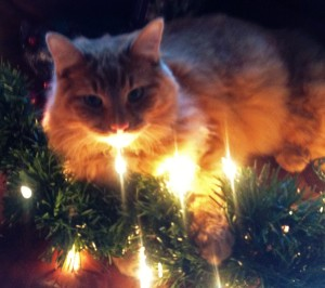 Butterscotch helps me wrap the lights for the garland